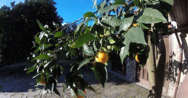 Douro Valley Oranges