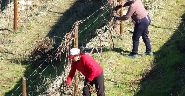 Douro Valley pruning time
