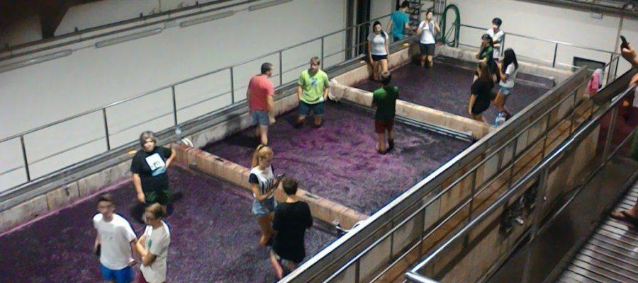 Douro Valley Wines