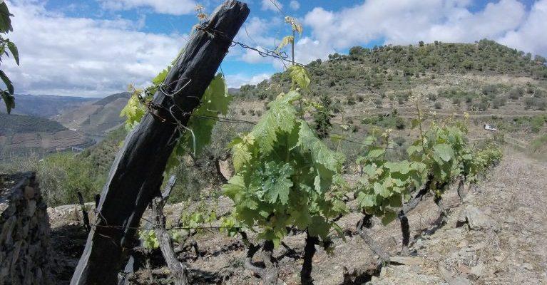 Douro Valley Spring